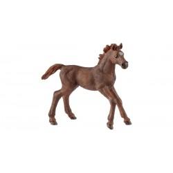 PULEDRO PUROSANGUE INGLESE cavalli in resina SCHLEICH miniature 13857 Farm World FOAL età 3+